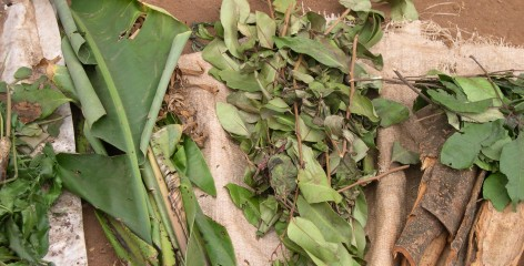 Leaves, stems and barks comprise the key ingredients of traditional medicines in Oku