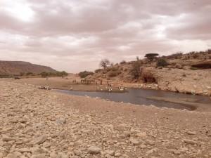 watering_livestock_sanaag_2014
