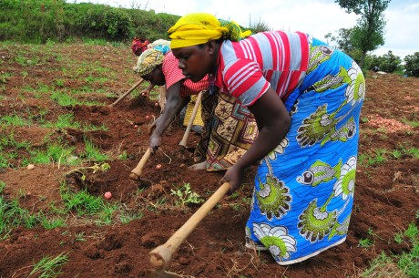 Agriculture is the mainstay of Uganda's economy and employs the highest number of people, particularly women. (Photo: UNDP Uganda)