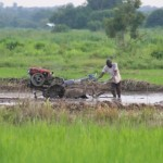 Ending poverty in Ghana: the role for agriculture